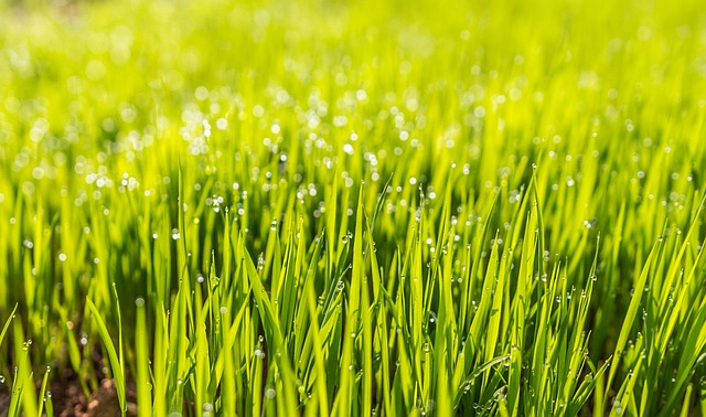 What You Should Know About Lawn Fertilizers
